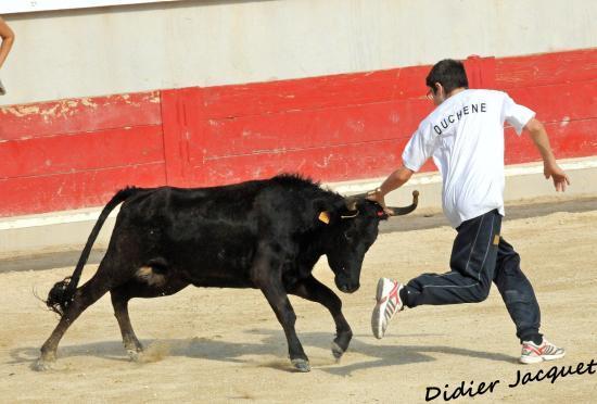 Maxime Duchêne et la vache